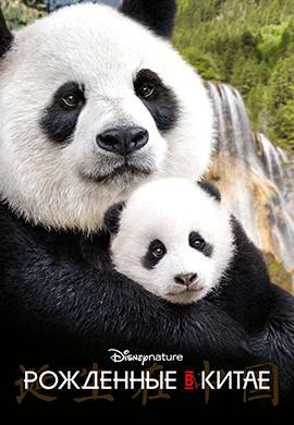Постер к фильму Рожденные в Китае 2016