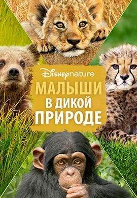 Постер к фильму Малыши в дикой природе 2016
