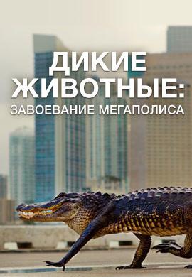 Постер к сериалу Дикие животные: завоевание мегаполиса 2018