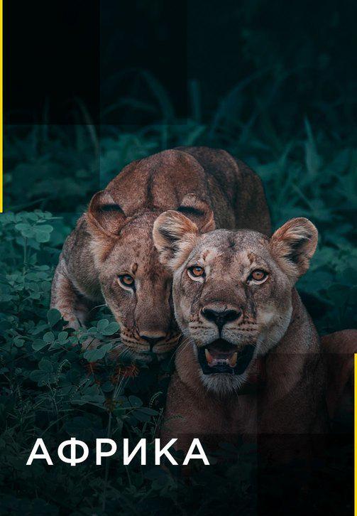 Постер к сериалу Африка 2016