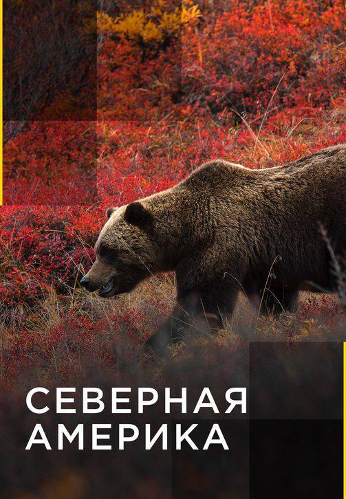 Постер к сериалу Северная Америка 2011