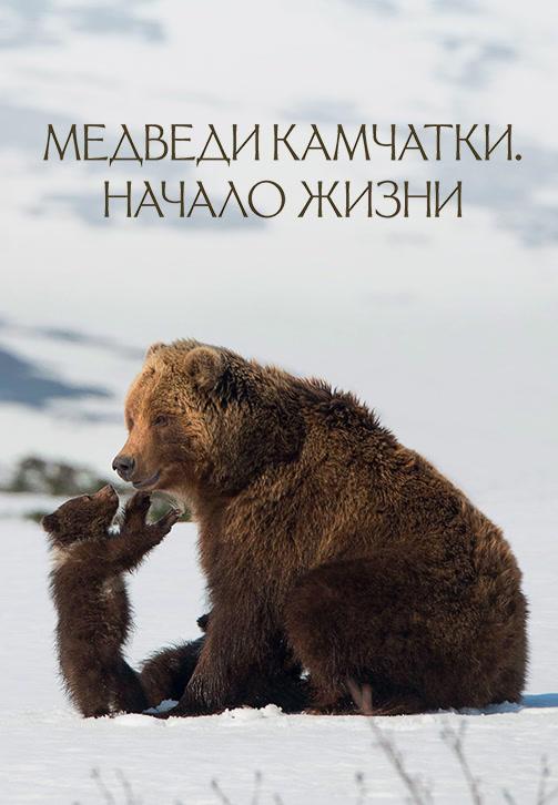 Постер к фильму Медведи Камчатки. Начало жизни 2018