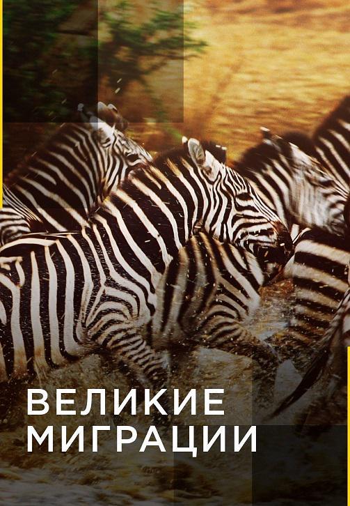 Постер к сериалу Великие миграции 2010