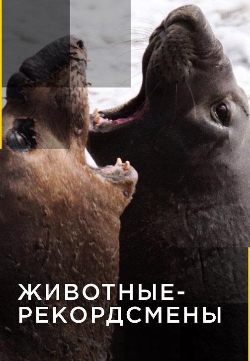 Постер к сериалу Животные-рекордсмены 2012
