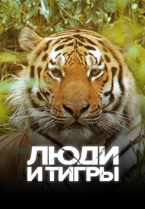 Постер к фильму Люди и тигры 2019